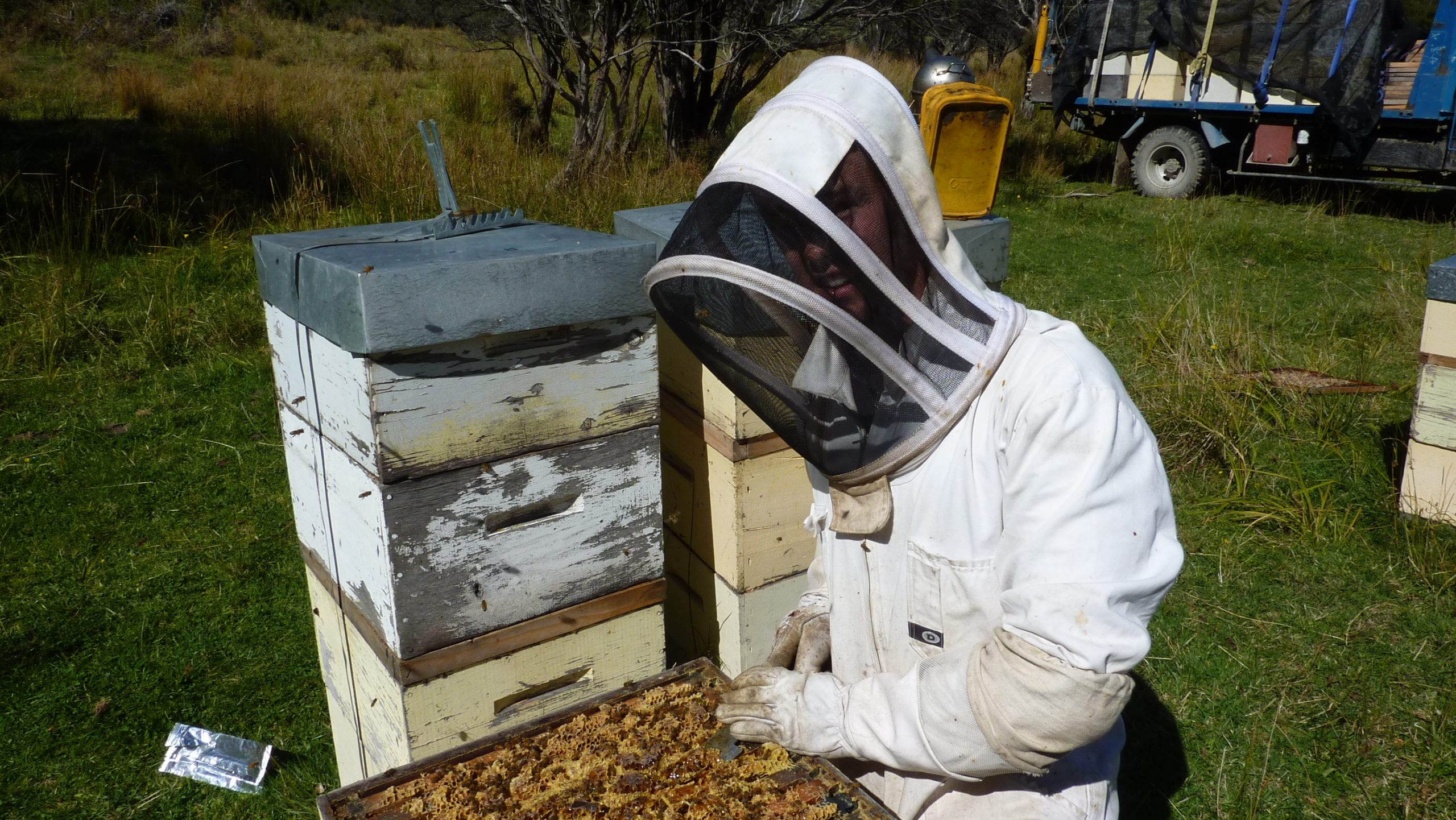 BEEKEEPER - MANUKA HONEY from THE ISLAND HILLS