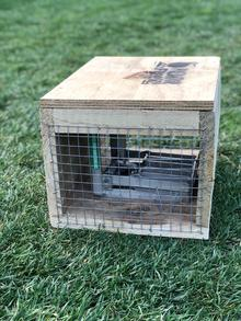 Sponsor a Stoat Trap DOC 200 at The ISland Hills Station